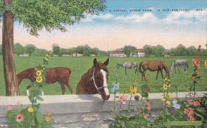 Kentucky Horses On A Typical Stock Farm
