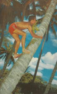 HAWAII ; PU-1970 ; Cocopalm Climber