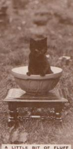 Cat In Bakery Bakers Bowl German Old Real Photo Cats Cigarette Card