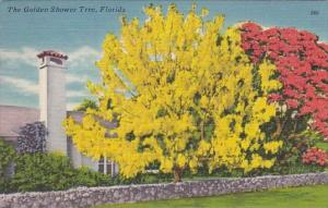 Florida The Golden Shower Tree 1952