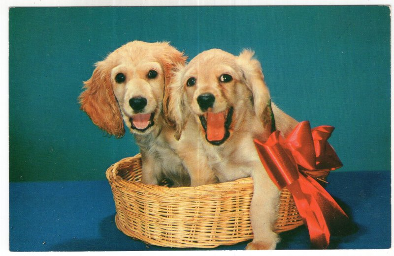 Red Ribbon Royalty - A Cute Pair of Blond Cocker Spaniels