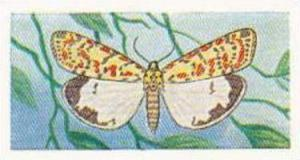 Swettenhams Tea Vintage Trade Card Butterflies & Moths 1958 No 13 Crimson Spe...