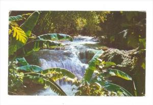 Mountain Stream, Jamaica, B.W.I. , PU-1959