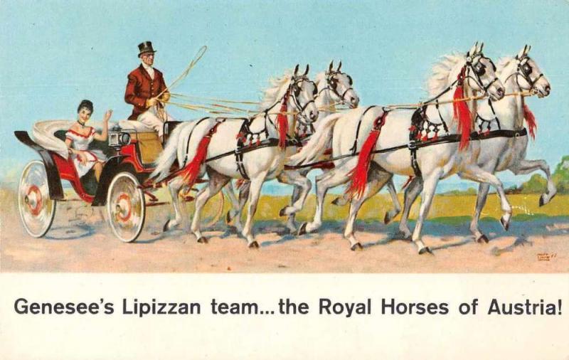 Austria Royal Horses Genesee's Lipizzan Team Vintage Postcard J76308