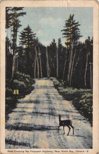 Canada, Ontario, near North Bay, Deer Crossing the Ferguson Highway