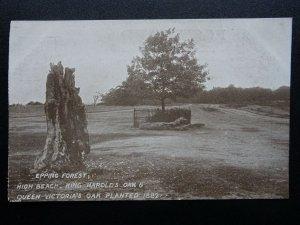 London Essex EPPING FOREST King Harolds Oak & Victorias Oak - Old RP Postcard