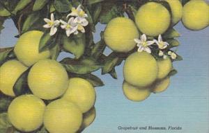 Grapefruit And Blossoms Florida Curteiclh