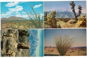 4 - Desert Scenes