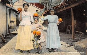 Panama Old Vintage Antique Post Card Chinese Oranges Chiriqui Rip on back
