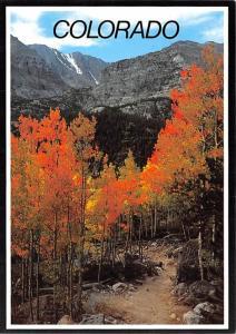 Colorado - Aspens