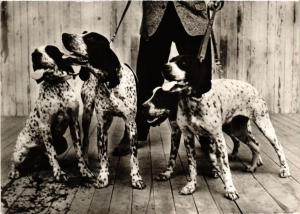 CPA Carte Photo DOGS (727691)