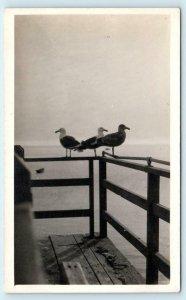 RPPC CATALINA ISLAND, CA California ~ SEA GULLS on Porch- AVALON c1910s Postcard