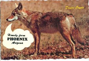 Howdy form Phoenix, Arizona, Desert Coyote, unused Postcard