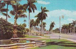 Florida Palm Beach Looking East On Beautiful Royal Poinciana Way