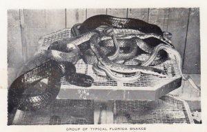 Florida Snakes , Everglades Wonder Gardens , BONITA SPRINGS , 30-50s