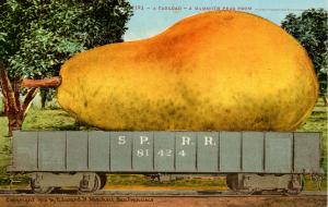 Exaggeration - A Carload, A Mammoth Pear from______