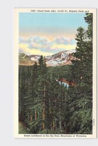 VINTAGE POSTCARD NATIONAL STATE PARK BIG HORN MOUNTAINS CLOUD PEAK