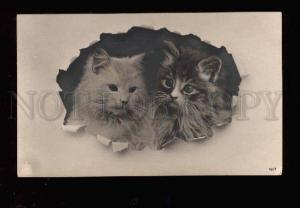 010730 Two Cute PUSSY CAT KITTENS Vintage PHOTO Tinted PC