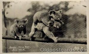 Bear Bears Postcard Post Card Old Vintage Antique