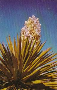 Cactus Yucca In Bloom In The Southwest