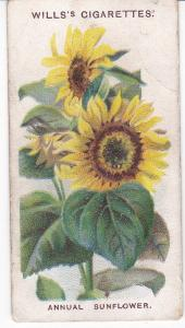 Cigarette Card Wills Old English Garden Flowers No 6