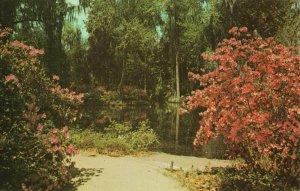 Postcard Magnolia Gardens near Charleston South Carolina