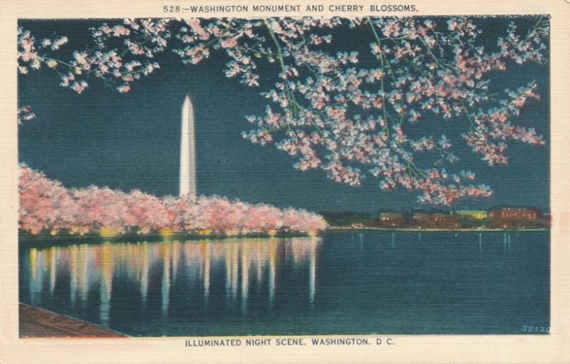 Washington Monument and Cherry Blossoms Night Scene, Washington, DC - Linen
