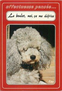 Postcard Animals pets Dog curly
