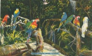 Parrot Jungle, Miami, Florida,  unused Postcard
