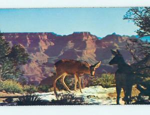 Pre-1980 GRAND CANYON National Park Arizona AZ hk3651