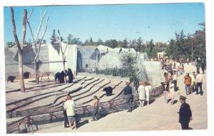 Bear Pits , Assiniboine Park , Winnipeg , Manitoba , Canada , PU-1966