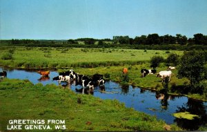 Wisconsin Greetings From Lake Geneva Showing Dairy Cattle In Pasture Creek