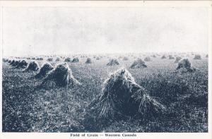 WESTERN CANADA, 1900-1910's; Field of Grain