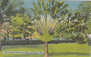 The Curious Traveler's Palm Of Florida 1953