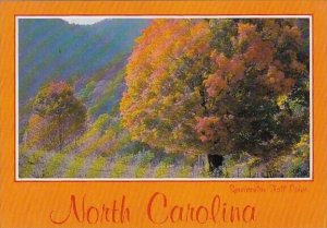 Spectacular Fall Color Charlotte North Carolina