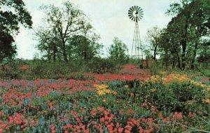 Postcard Wild Flowers Texas