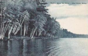 Maine Lake Kezar Birches Along The Shore Albertype