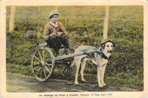 Un Attelage de Chien a Quebec Canada A Dog Cart Photogelatine W-Border Postcard
