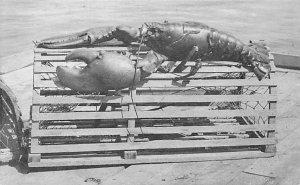 Monarch of the Sea Lobster Unused
