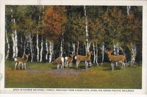 Utah Deer In Kaibab National Forest