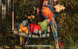 Florida Miami Parrot Jungle Colorful Macaws Swing Quartet