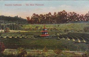 CALIFORNIA, 1900-1910´s; The Maze Piedmont