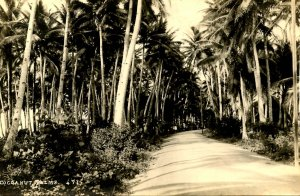 Philippines - Cocoanut Palms. Photo: Eduardo DeLeon *RPPC