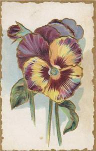 Embossed, colored pansy, 10-20s