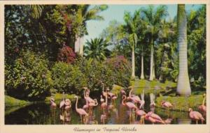 Birds Flamingos In Tropical Florida