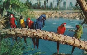 Florida Tampa Busch Gardens Trained Parrots