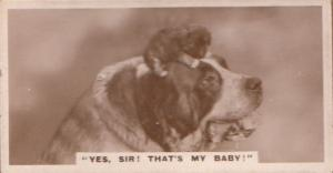 Yes Sir Thats My Baby Dog Dogs Antique German Real Photo Cigarette Card