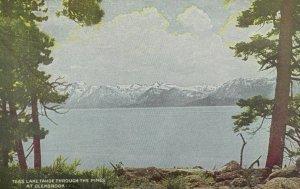 C.1910 Lake Tahoe Through The Pines, Glenbrook, Calif. Vintage Postcard P105