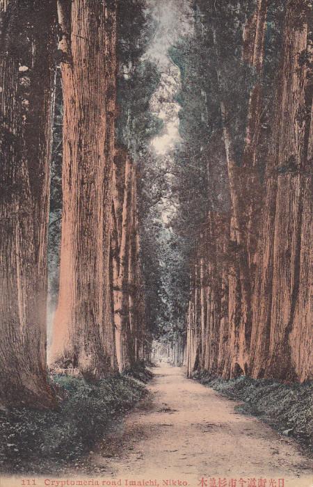 Lined-Up Trees, Cryptomeria Road Imaichi, NIKKO, JAPAN, 1900-1910s