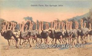 Hot Springs, Ark, USA Ostrich Farm Postcard Post Card Hot Springs, Ark, USA O...
